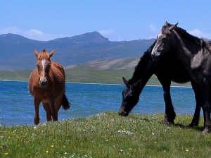 Horses by the lake