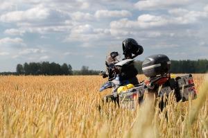 A csodálatos búzatáblában. Szibéria gyönyörű. / In the beautiful wheat field. Siberia is gorgeous.
