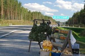 Az emberek azt árulják, amit az erdő ad. / People sell, whatever the forest gives.
