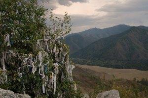 Kívánságfa Szibériában / Wish tree in Siberia