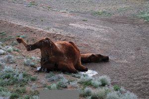 A sivatag még a legkeményebbeket is próbára teszi / The desert takes its toll
