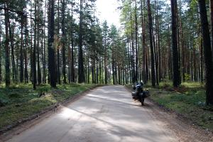 Két falut összekötő erdei út, Latviában / Road in the forest connecting two villages in Latvia